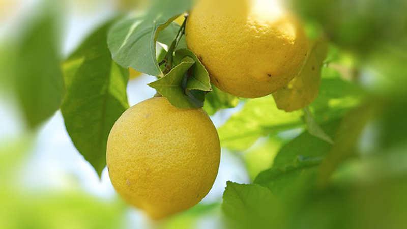 Лимоны:  польза и  вред, 20 способов применения в быту
