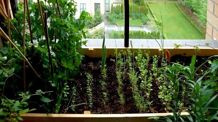 Как на балконе сделать грядку с  вкусной и полезной зеленью