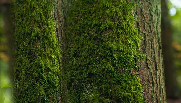 мох на дереве в лесу