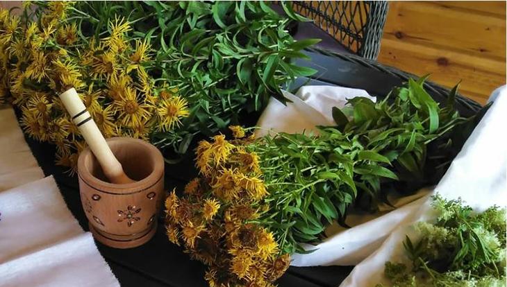 Какие средства из лекарственных растений можно применять для лечения: ванны, настои, соки, компрессы, примочки,масла, мази; советы, рецепты