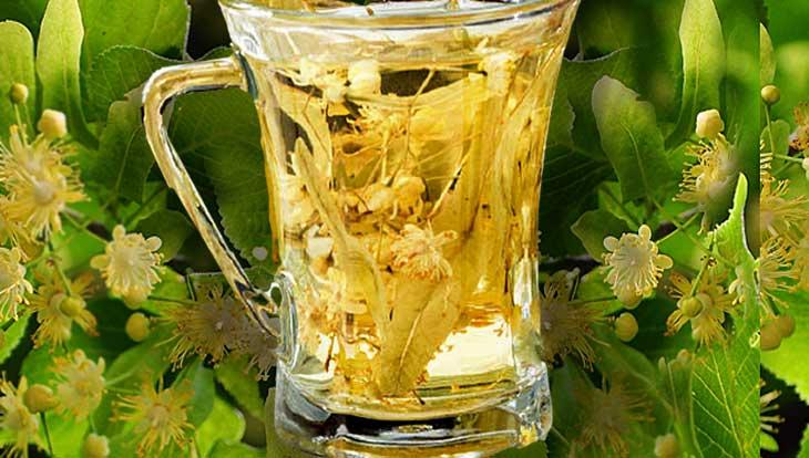 липовый чай -напиток здоровья