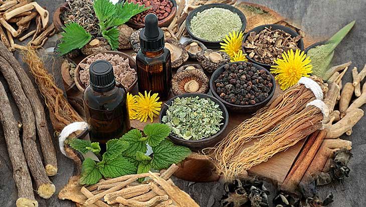 Адаптогены: источник силы, здоровья и долголетия